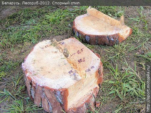 спил с дерева на котором Владимир Дашугин выполнял Валку